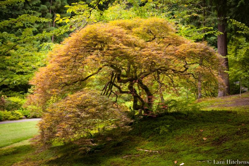 tree-1-of-1